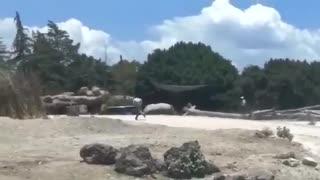 rhino against vehicles