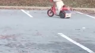 Dog casually rides scooter around parking lot