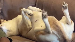 "Dog Kicks at ""Kapew"""