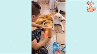 Cute Funny and Smart Dogs Compilation #16 | Cute Buddy