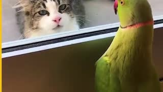 Talking Parrot Trying To Play Hide & Seek With Cat