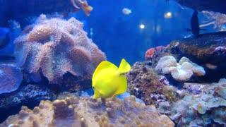 Cute Baby Fish Swimming