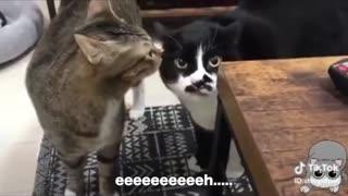 Cats talking !!! Funny !!!!