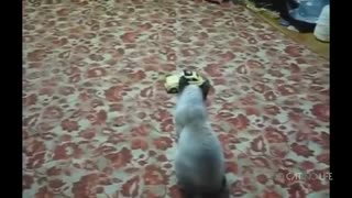 Funny cats... Scaredy cats compilation