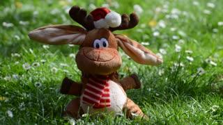 Reindeer Reindeer - 3723