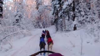 Wild Alaska - Dog Sledding at -40