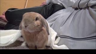 Bunnies being cute