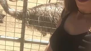 Australian Emus!