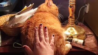 Cat Powered Touch Lamp