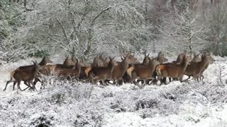 group of deer in their natural environment