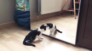 Cats being deceived