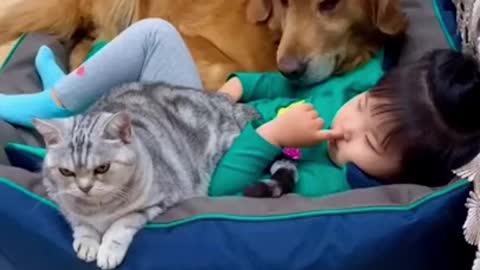 DOG AND CAT BESTFRIEND : INSPIRING VIDEO