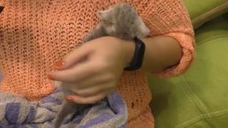 First bath and Feeding a weak street kitten - Whole story