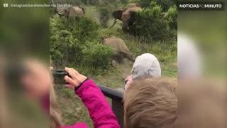 Filhote de elefante escorrega ao lado de turistas na África do Sul