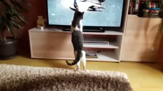 Funny Cats Compilation VERY SWEET
