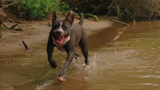 dog running awesome