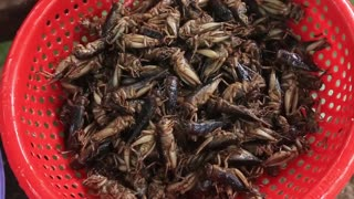 Yummy cooking Crickets recipe _ Cooking skills _ Khmer Survival Skills