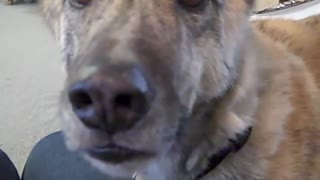 Funny Ultimate Dog Tease
