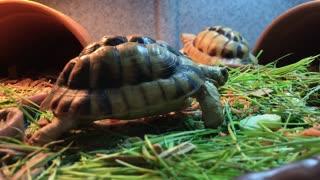Enjoy turtle