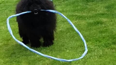 Hoop dog