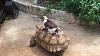 Doggo Takes Turtle for a Ride