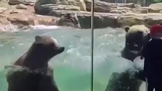 Cute Bears Making Waves