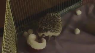 Adorable Hedgehog wearing Christmas hat