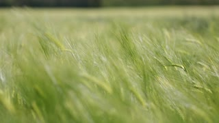 The beautiful grass of nature