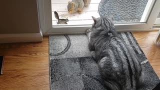 Crazy squirrel tries to attack cat!