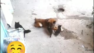 A DIFFERENT RELATIONSHIP BETWEEN DOGS AND CATS###
