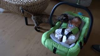 Cats meet new baby