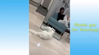 Funny Cats | Animal Planet