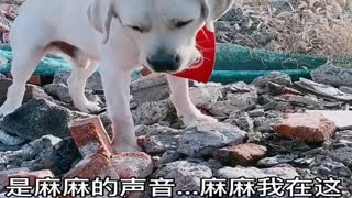 Smart dog friendly with human life ! Part 04