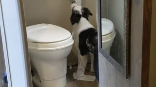 Dog Caught Unrolling Entire Toilet Paper Roll