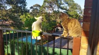Cat tries to befriend wild cockatoo