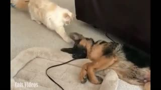 A Cat Trying To Catch A Dog's Ear Asleep.