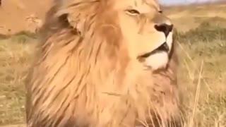 Thats a true king's hair
