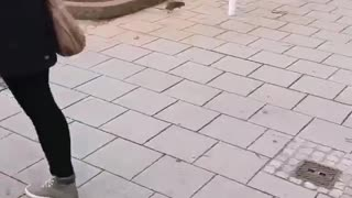The Hunter Cat 💯🙂