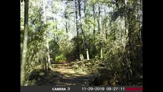 Trail Cam 8
