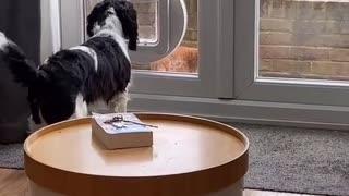 Doggy Curious About Cat Using Pet Door