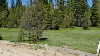 Beautiful Sierra Nevada meadow