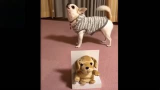 Funny Animals And Cute Pets All Good Times Compilation #1