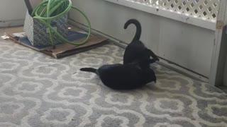 Kitties 5
