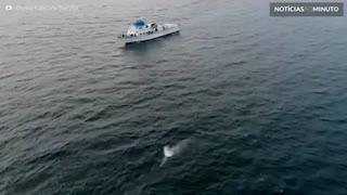 Baleia-cinzenta e filhote são filmados na Califórnia