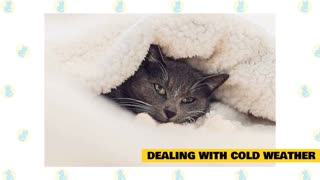 cats in cold weather