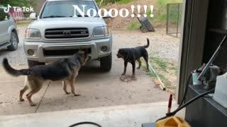 Don't pet that dog 🤣