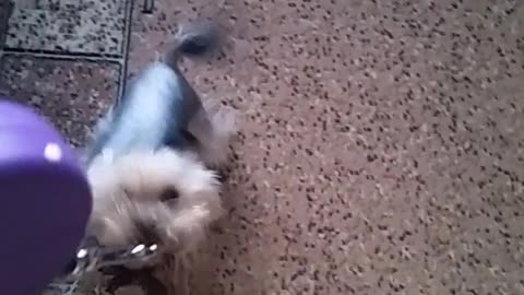 The dog wants to walk.