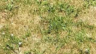 Little birdie in the grass