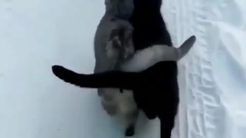Коты греют друг друга!