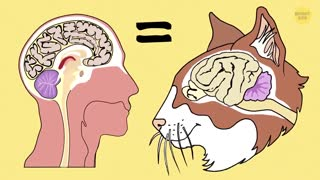 40 Awesome Cat Facts to Understand Them Better!
